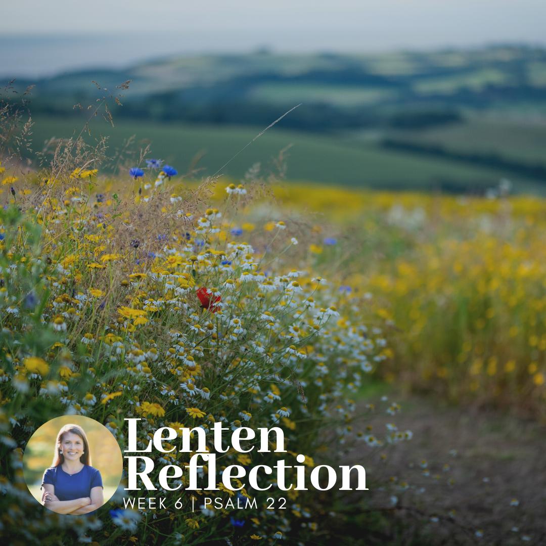 Lenten Reflection   Psalm 22