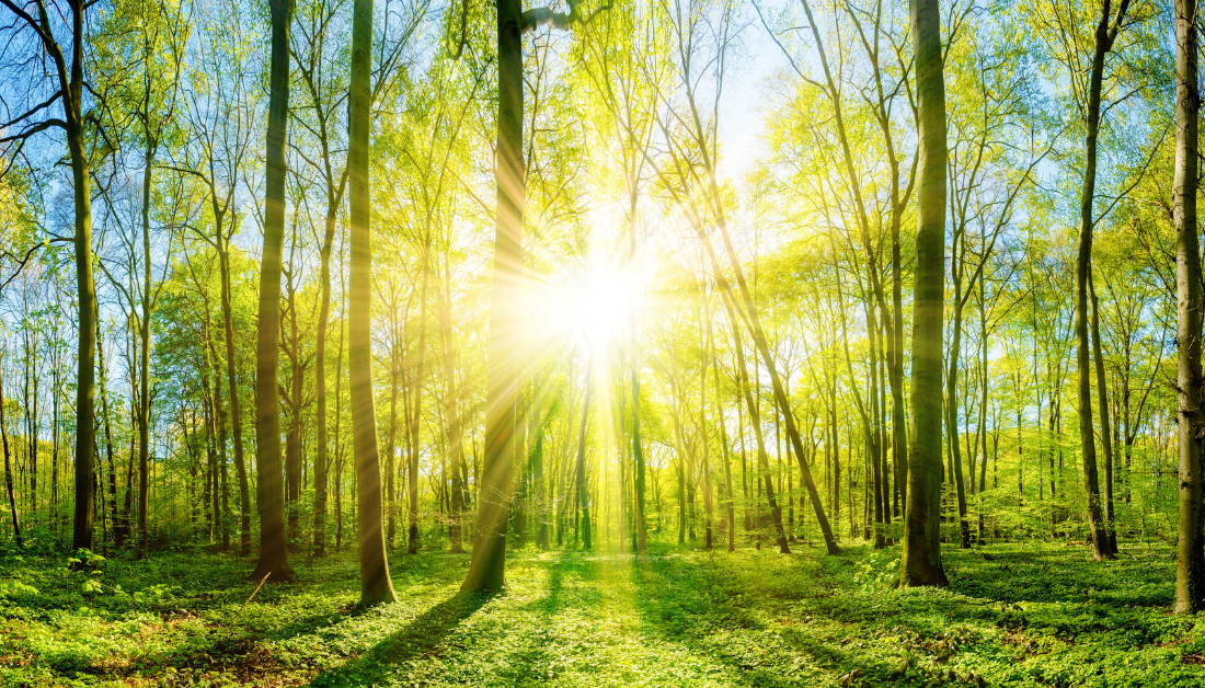 picture of sun's rays shining brightly through trees