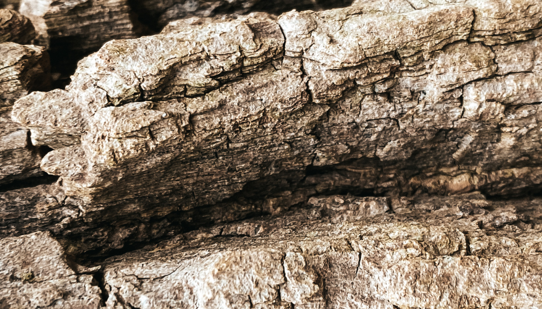 close up picture of tree bark