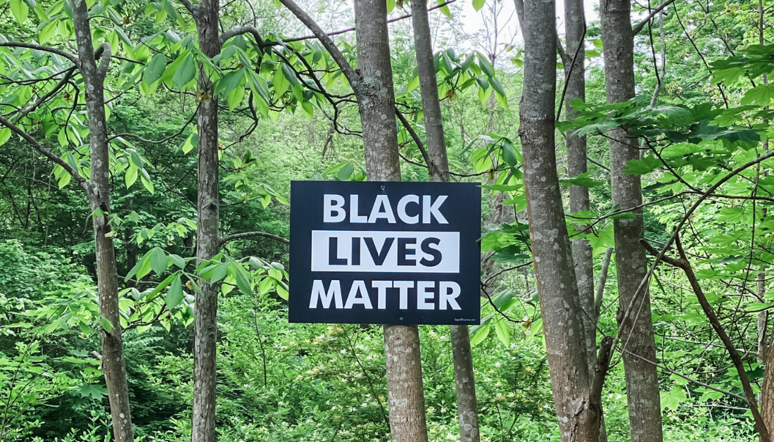 tree in a forest with a sign nailed to it that says Black Lives Matter