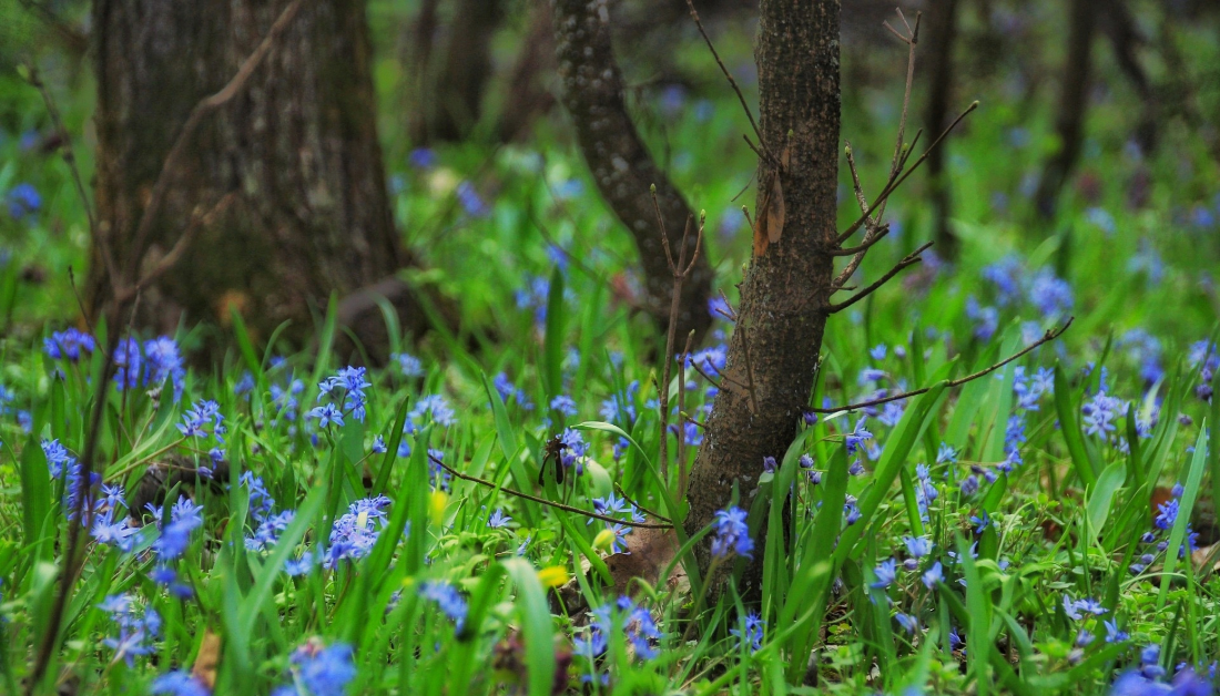 wildflowers in a woods