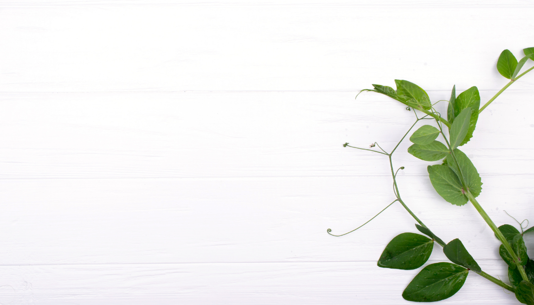 white background with a green vine symbolizing healing